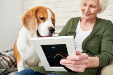 Portrait of gorgeous purebred beagle dog with senior woman holding photograph in frame both sitting on armchair at home enjoying time together