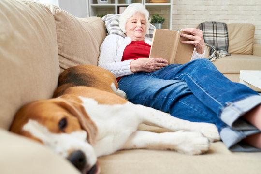 Full length portrait of white haired senior woman resting on couch reading book with sleeping dog enjoying afternoon nap at home, copy space