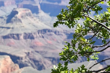 Focus on tree with the Grand Canyon in background