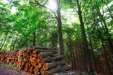 Wooden logs timber stacked in Harz Germany