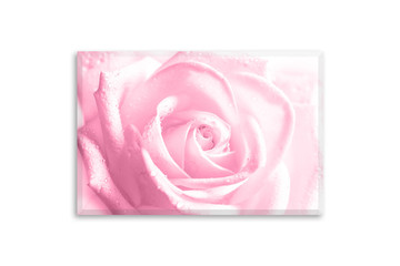 Floral canvas isolated on white wall, interior decoration mock up. Beautiful pink rose flower. Wall art photography