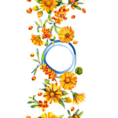 Medicinal, garden calendula. Aromatic, wholesome sea buckthorn. Juicy, tasty, orange berry. Sunny, beautiful flower. Watercolor. Illustration
