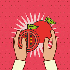 hand holding fresh vegetable tomato vector illustration