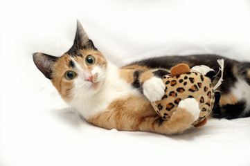 three-colored cat with a toy on a white background