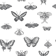Sketch illustration of a vector butterfly. Ornament with butterflies.