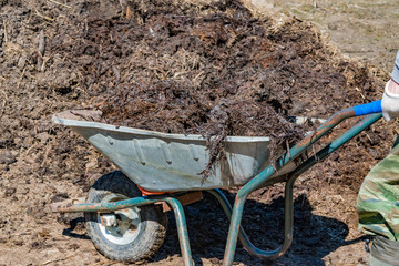 Cow dung, manure rotted compost organic fertilizer for agriculture