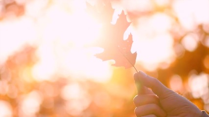 Wall Mural - Autumn backdrop. Person holding autumn leaf with sun beam over blurred autumn background. 3840X2160 4K UHD video footage