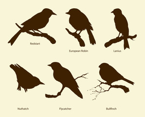 Vector set of birds: Bullfinch, Redstart, Nuthatch, Flycatcher, Lanius, Robin