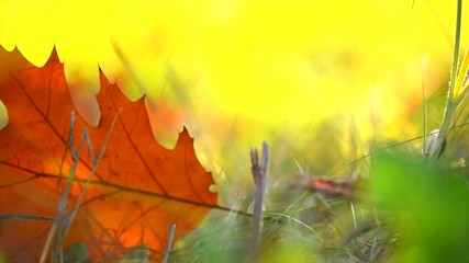 Wall Mural - Autumn leaves on a grass in autumnal park. Fall. Slow motion. 3840X2160 4K UHD video footage