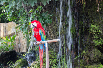 Macaw in the Rain forest