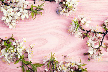 Frame of cherry blossoms branches on pink wooden background. Copy space.