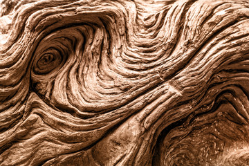 Driftwood detail. Natural textured background Wall mural