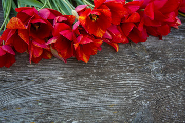 beautiful fresh tulips on rustic wooden surface