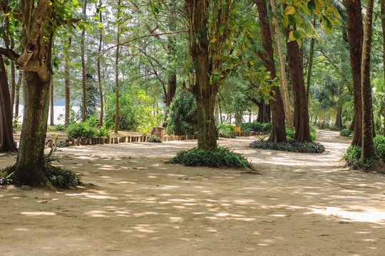 Beautiful park with tall trees on the island