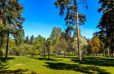 Spring forest park in sunny day landscape