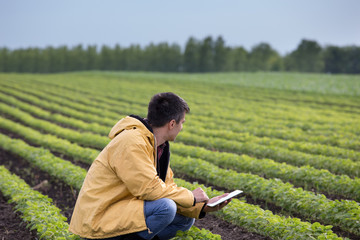 Farmer with tablet in soybean field in spring