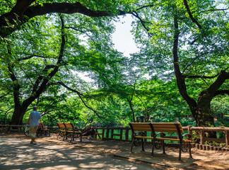 公園のベンチ 井の頭公園