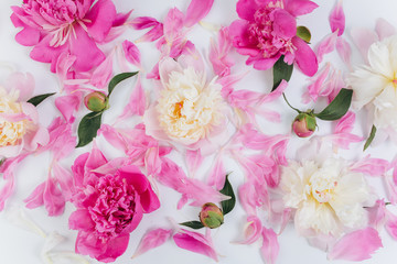 Pink and white floral background of fresh peony flowers buds and petals.
