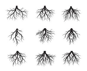 Set of black naked Root. Vector Illustration.