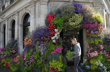 A florist adds finishing touches to a display in a shop front which is participating in the Chelsea In Bloom festival in London, Britain