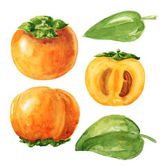 Hand drawn watercolor persimmon set with green leaves, isolated on white background. Delicious fruit clip-art illustration.