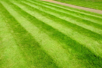 Recently cut garden lawn with mower stripes. Full frame background texture.