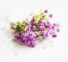 Wild thyme flowers