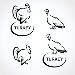 Turkey set. Vector