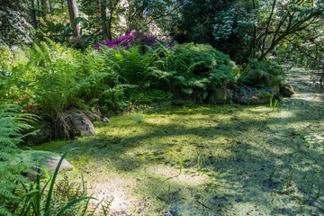 Pond And Ferns 2