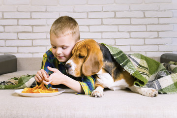 funny boy and dog Beagle eating chips on sofa in the room