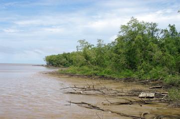 Mangrove guyanaise