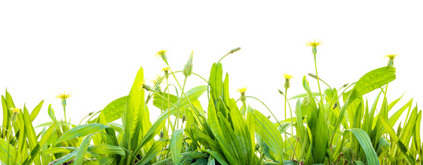 grass and wild flowers  isolated background