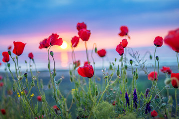 sunrise and poppies flowers background
