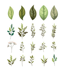 branch with leafs decorative icons vector illustration design