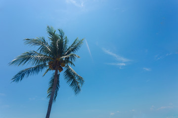 Coconut tree with blue sky less cloud on background, with light and more contrast