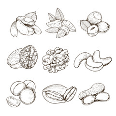 Hand drawn collection of nuts. Vectro illustration. Sketch style nuts set.
