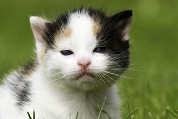 A puppy cat in close-up.