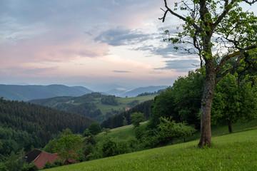 Wall Mural - Sonnenuntergang im Schwarzwald