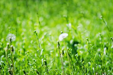 Green grass, natural summer background. Selective focus.