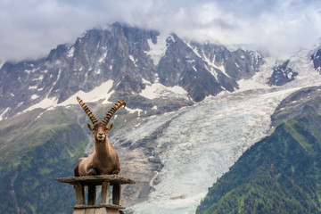 Wall Mural - Ibex, Range of Mont Blanc, France