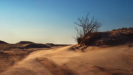The Peipsi dunes