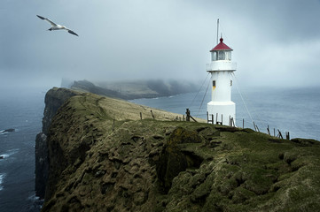 Moody day in Faroe Islands with Northern Gannet flying near lighthouse