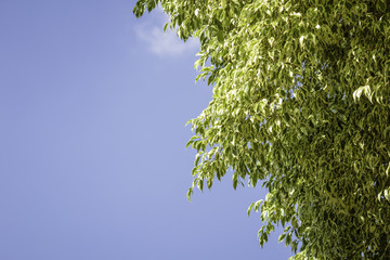 Blue sky with leaf