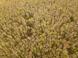 Aerial photography of birch forest