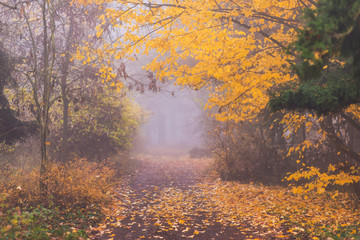 Papiers peints Forets Mystique autumn scenery in the forest, with colorful foliage and fog