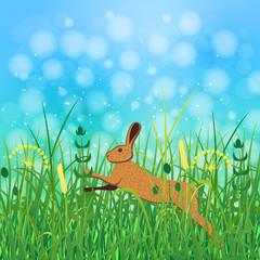 Concept Summer. Sky, blur, field grass