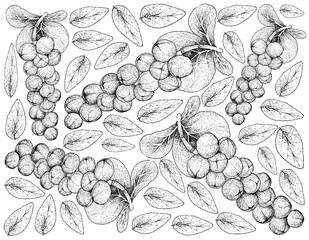 Hand Drawn Background of Coccoloba Uvifera or Seagrape Fruits