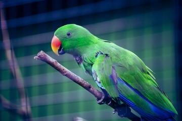 緑色のインコ
