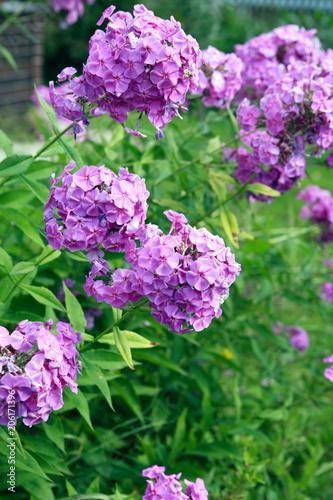 Nice Pink Flowers