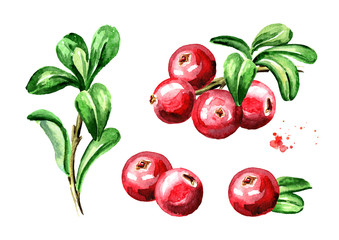 Cranberry compositions set. Fresh berries with leaves and branches. Hand drawn watercolor illustration  isolated on white background